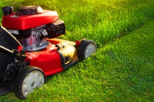Achieving a Healthy Lawn_Dibico